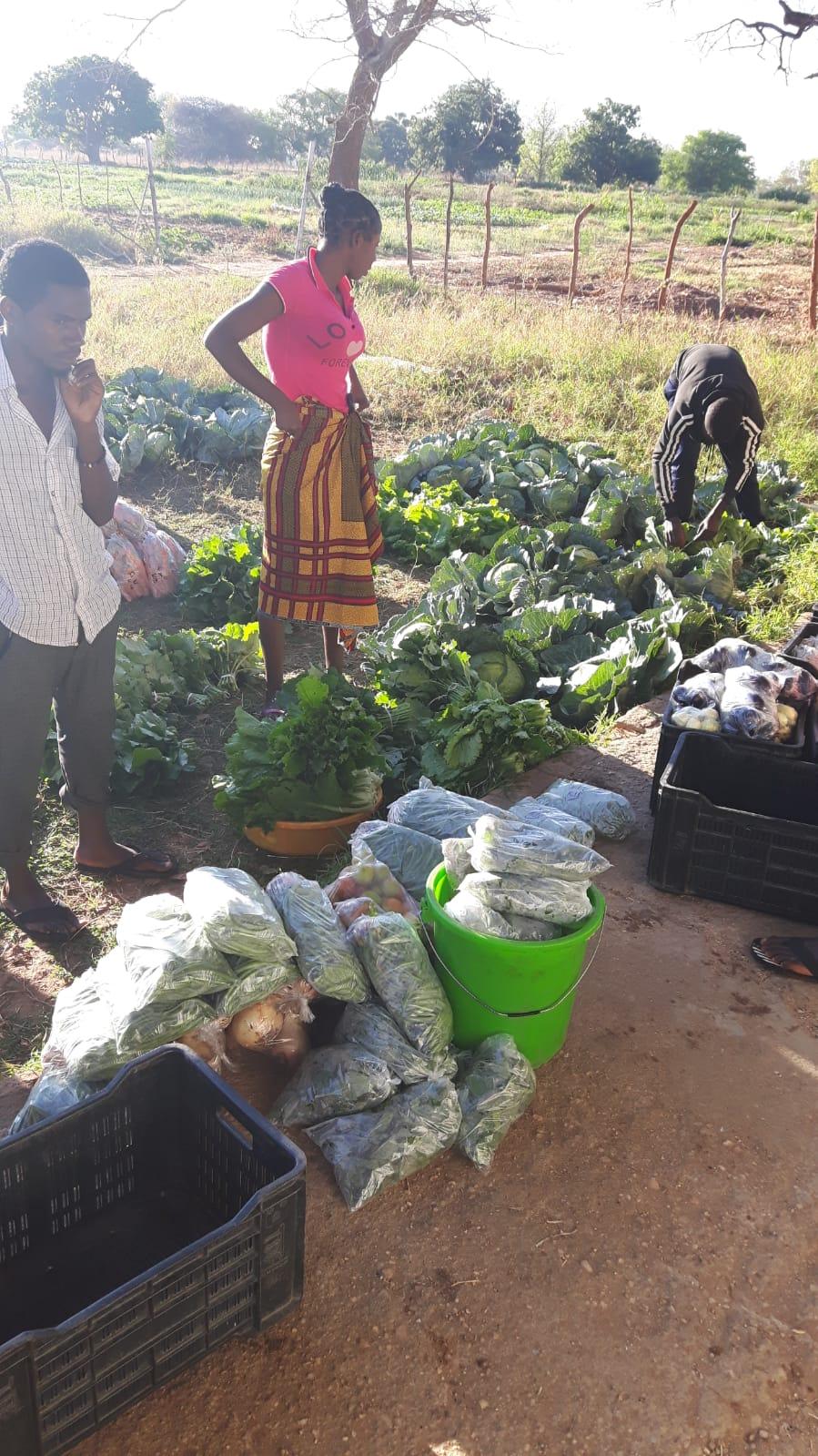 Die Gemüseproduktion der Twin Fountain Studenten